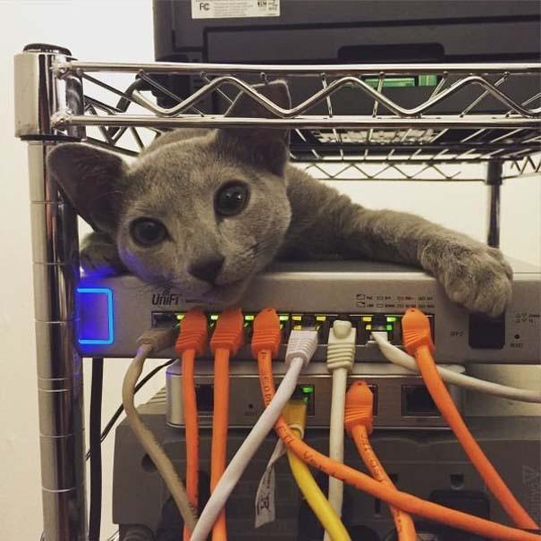 Γάτες που... κάνουν τα δικά τους! #64 (6)