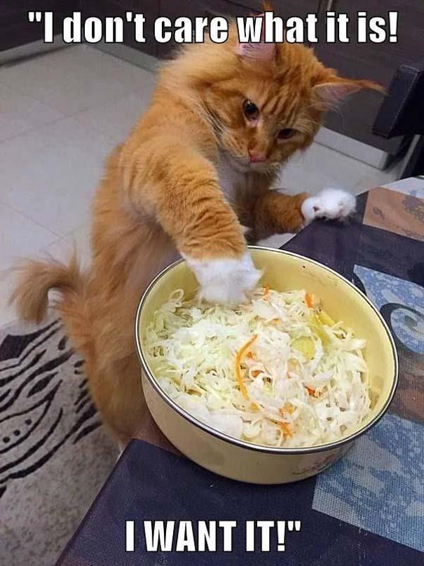Γάτες που... κάνουν τα δικά τους! #64 (7)