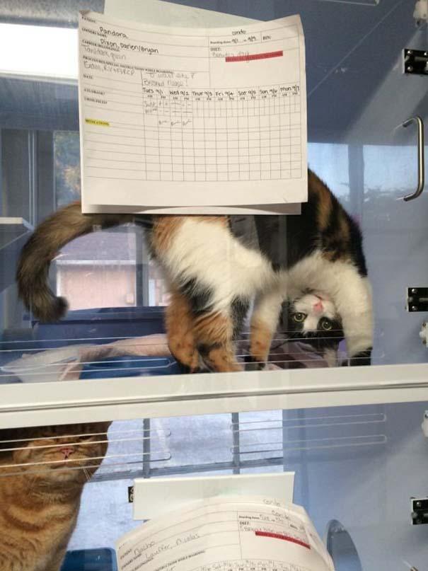 Γάτες που... κάνουν τα δικά τους! #64 (9)