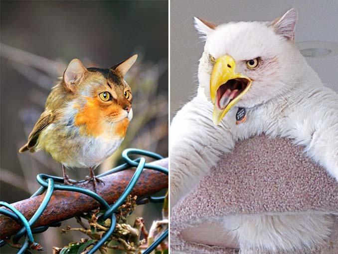 Γάτες και πτηνά (6)