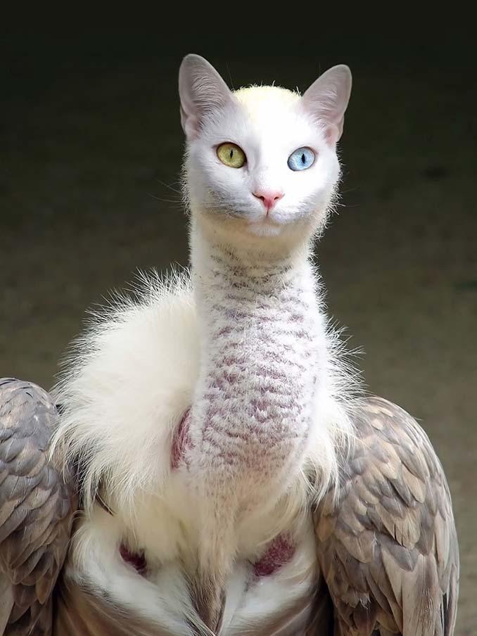 Γάτες και πτηνά (9)