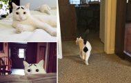 25 γάτες με τα πιο απίθανα σημάδια στη γούνα τους (26)