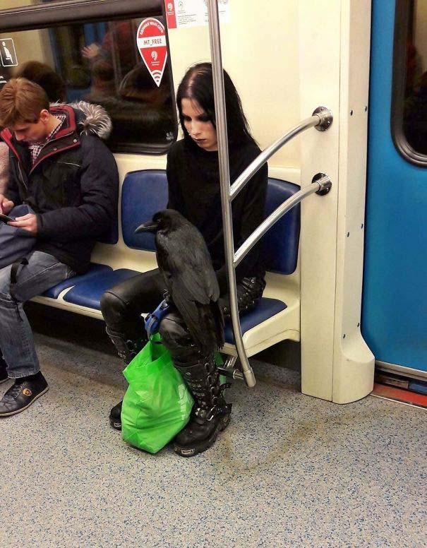 Παράξενες και κωμικοτραγικές φωτογραφίες στα μέσα μεταφοράς #27 (2)