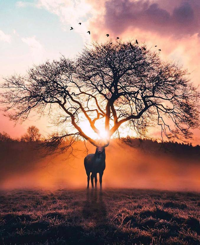 Οι μαγευτικές φωτογραφικές συνθέσεις ενός 19χρονου καλλιτέχνη (10)