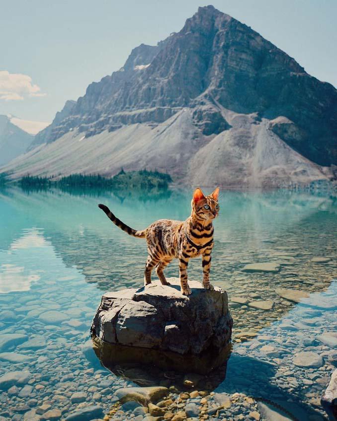 Οι περιπέτειες μιας πανέμορφης γάτας στην άγρια φύση του Καναδά (1)