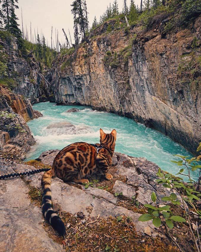 Οι περιπέτειες μιας πανέμορφης γάτας στην άγρια φύση του Καναδά (2)