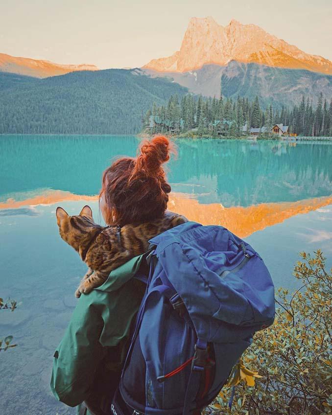 Οι περιπέτειες μιας πανέμορφης γάτας στην άγρια φύση του Καναδά (3)