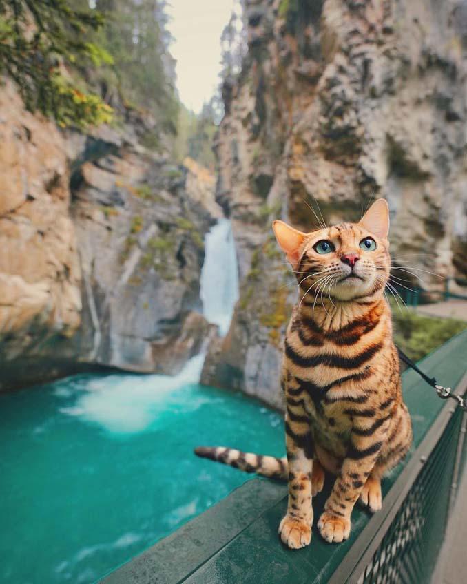 Οι περιπέτειες μιας πανέμορφης γάτας στην άγρια φύση του Καναδά (4)