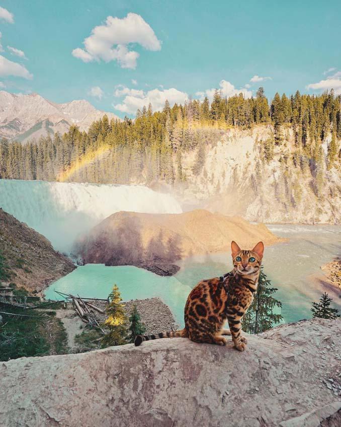 Οι περιπέτειες μιας πανέμορφης γάτας στην άγρια φύση του Καναδά (7)