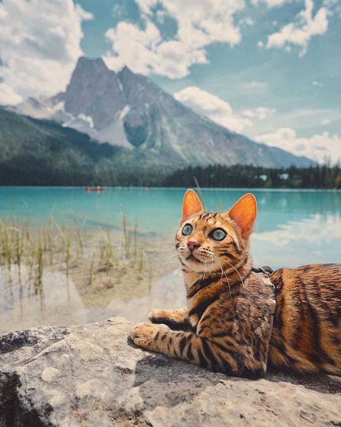 Οι περιπέτειες μιας πανέμορφης γάτας στην άγρια φύση του Καναδά (8)