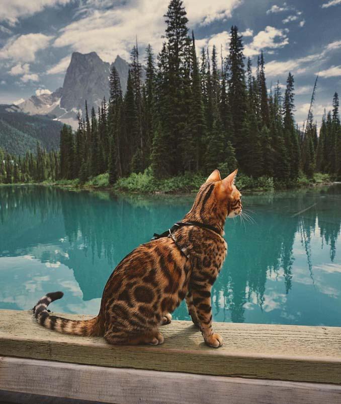 Οι περιπέτειες μιας πανέμορφης γάτας στην άγρια φύση του Καναδά (9)
