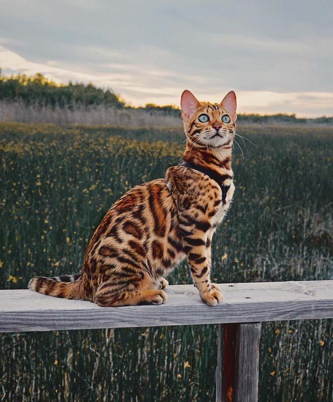 Οι περιπέτειες μιας πανέμορφης γάτας στην άγρια φύση του Καναδά (10)