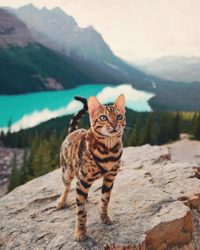 Οι περιπέτειες μιας πανέμορφης γάτας στην άγρια φύση του Καναδά (11)