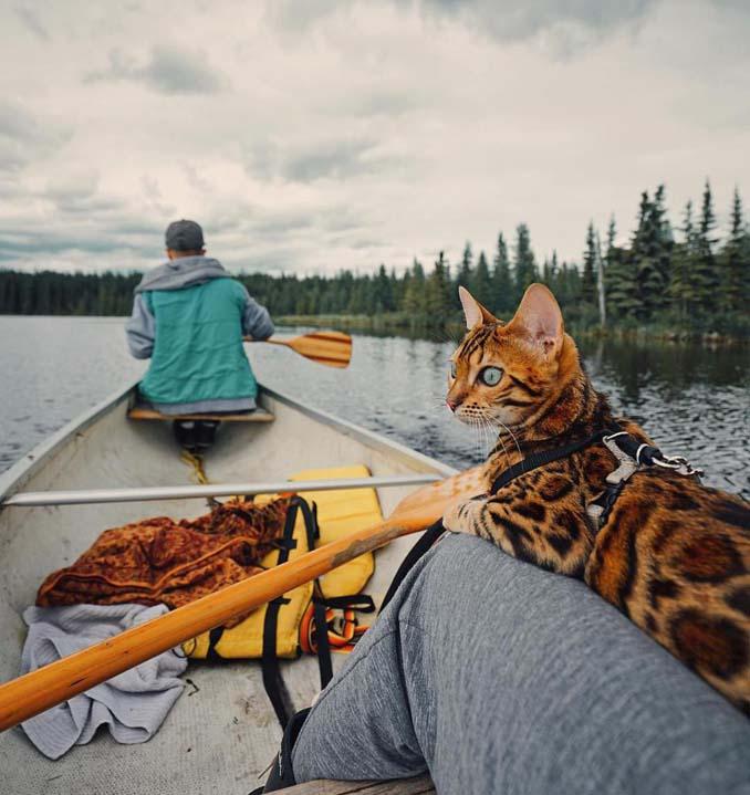 Οι περιπέτειες μιας πανέμορφης γάτας στην άγρια φύση του Καναδά (12)
