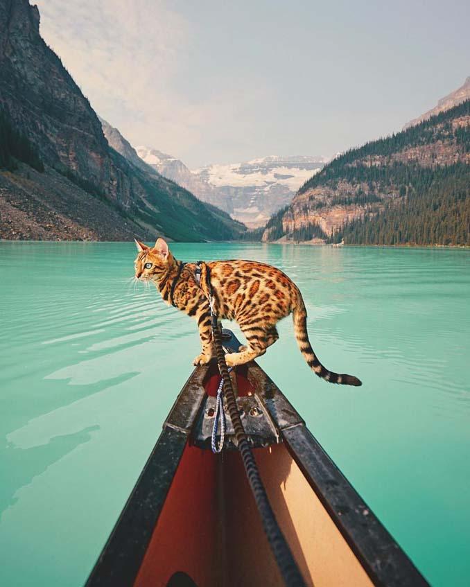 Οι περιπέτειες μιας πανέμορφης γάτας στην άγρια φύση του Καναδά (14)