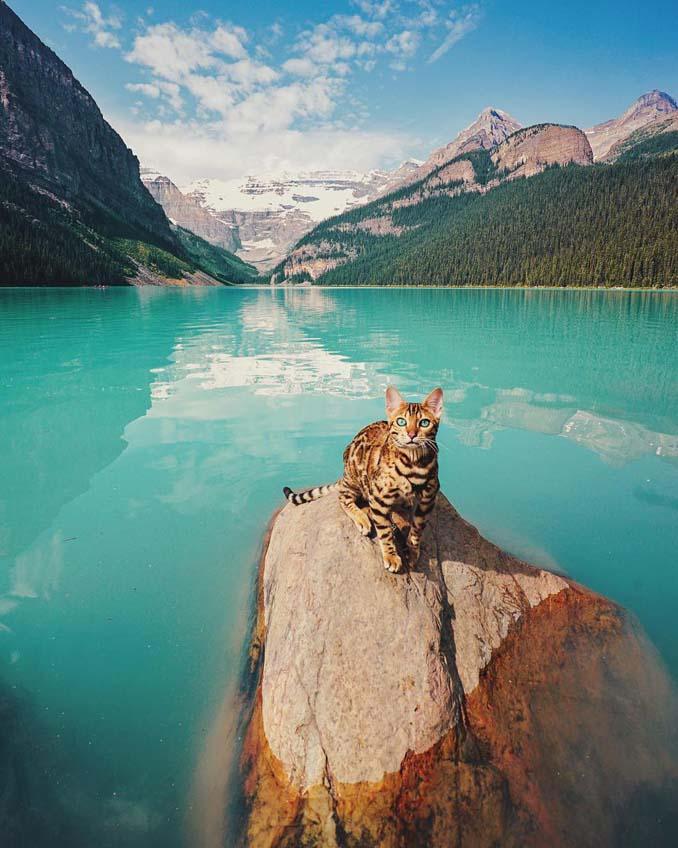 Οι περιπέτειες μιας πανέμορφης γάτας στην άγρια φύση του Καναδά (15)