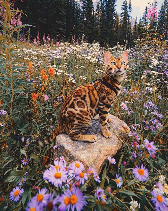 Οι περιπέτειες μιας πανέμορφης γάτας στην άγρια φύση του Καναδά (16)