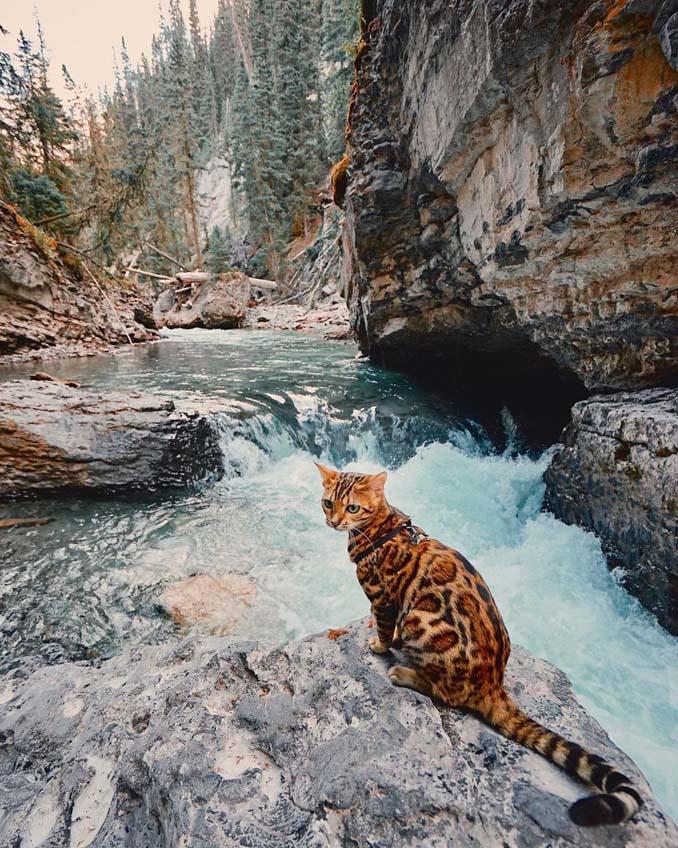 Οι περιπέτειες μιας πανέμορφης γάτας στην άγρια φύση του Καναδά (17)