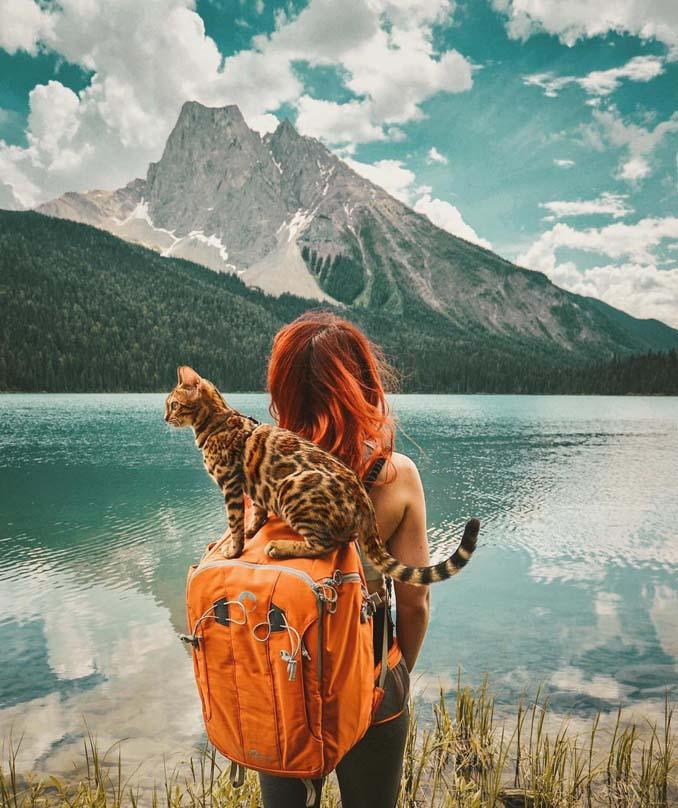 Οι περιπέτειες μιας πανέμορφης γάτας στην άγρια φύση του Καναδά (18)