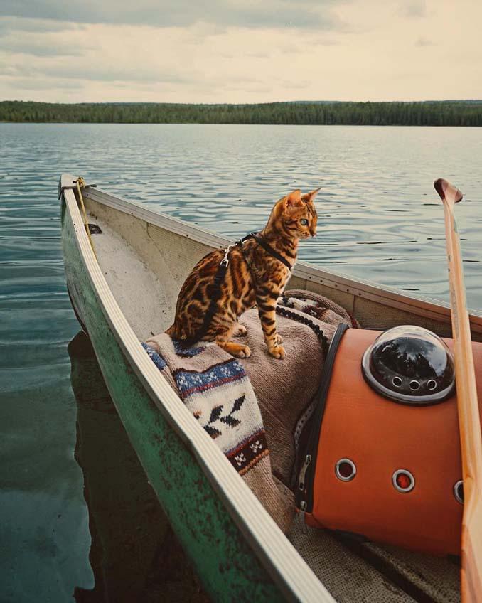 Οι περιπέτειες μιας πανέμορφης γάτας στην άγρια φύση του Καναδά (20)