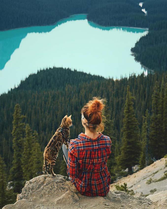 Οι περιπέτειες μιας πανέμορφης γάτας στην άγρια φύση του Καναδά (21)