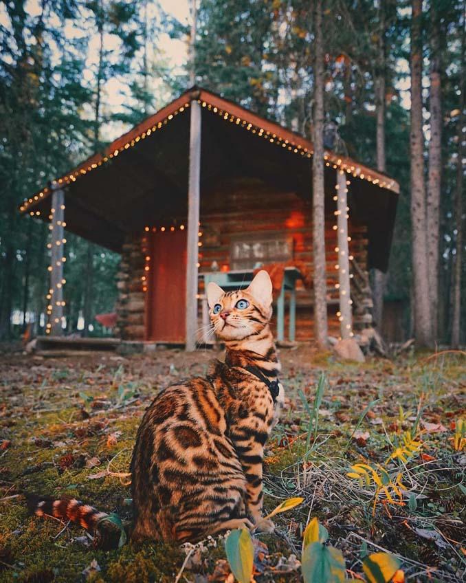 Οι περιπέτειες μιας πανέμορφης γάτας στην άγρια φύση του Καναδά (22)