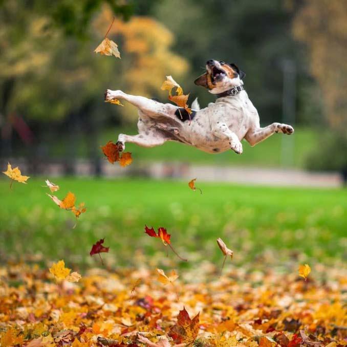 Σκύλοι που έχουν τρελαθεί με το Φθινόπωρο (1)