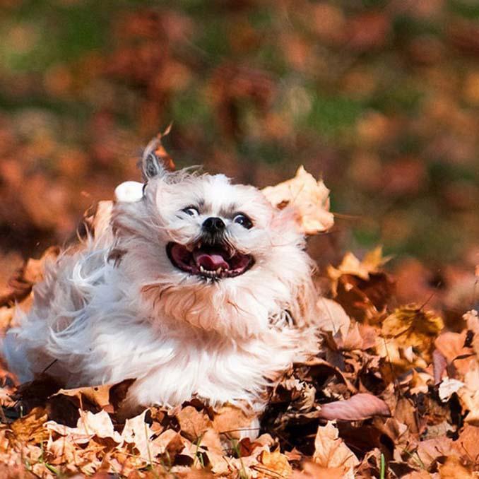 Σκύλοι που έχουν τρελαθεί με το Φθινόπωρο (2)