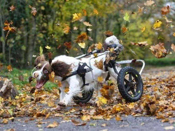 Σκύλοι που έχουν τρελαθεί με το Φθινόπωρο (3)