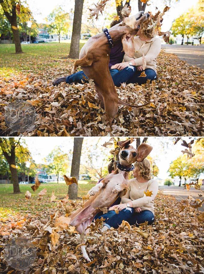 Σκύλοι που έχουν τρελαθεί με το Φθινόπωρο (4)