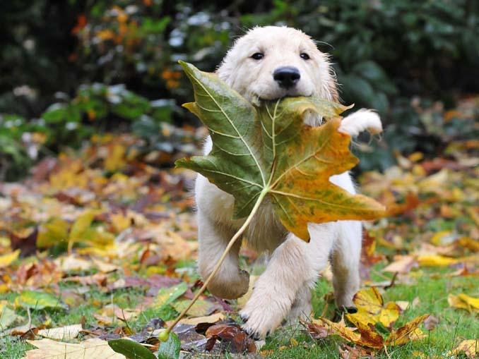 Σκύλοι που έχουν τρελαθεί με το Φθινόπωρο (5)