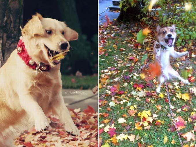Σκύλοι που έχουν τρελαθεί με το Φθινόπωρο (6)