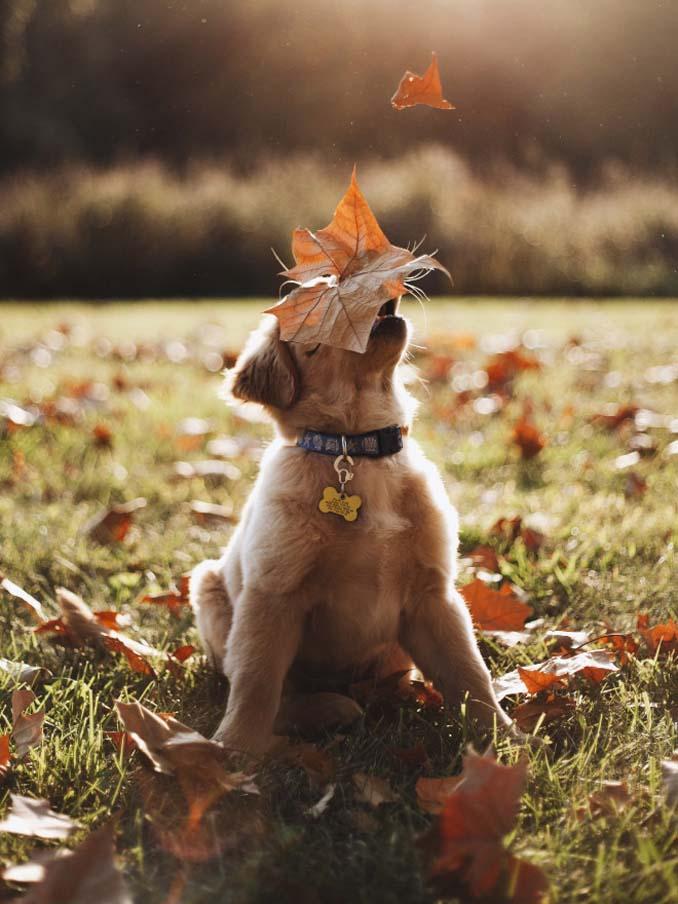 Σκύλοι που έχουν τρελαθεί με το Φθινόπωρο (10)