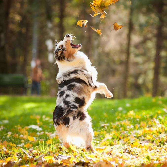 Σκύλοι που έχουν τρελαθεί με το Φθινόπωρο (15)