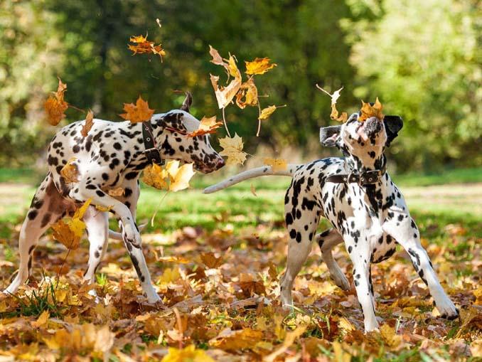 Σκύλοι που έχουν τρελαθεί με το Φθινόπωρο (16)