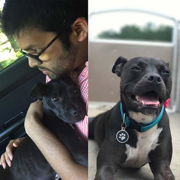 23 ζώα που έλαμψαν από ευτυχία μετά την υιοθεσία τους (2)