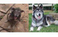 23 ζώα που έλαμψαν από ευτυχία μετά την υιοθεσία τους (10)