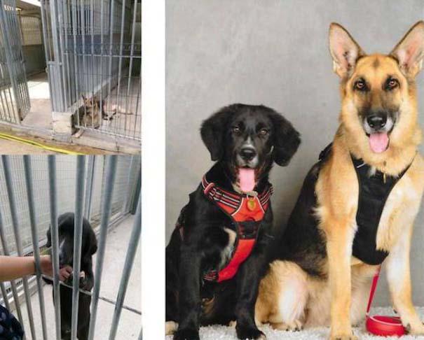 23 ζώα που έλαμψαν από ευτυχία μετά την υιοθεσία τους (14)