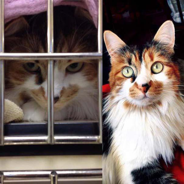 23 ζώα που έλαμψαν από ευτυχία μετά την υιοθεσία τους (18)
