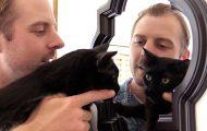 10 πράγματα που κάθε ιδιοκτήτης γάτας έχει κάνει