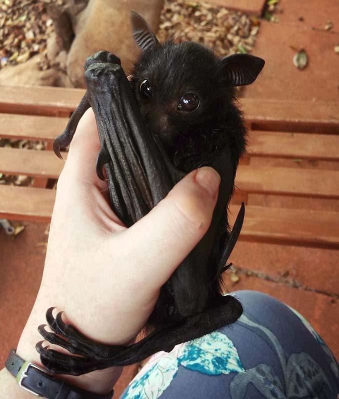 Αν πιστεύετε πως οι νυχτερίδες είναι τρομακτικές αυτές οι φωτογραφίες θα σας αλλάξουν γνώμη (2)