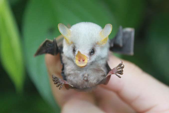 Αν πιστεύετε πως οι νυχτερίδες είναι τρομακτικές αυτές οι φωτογραφίες θα σας αλλάξουν γνώμη (4)