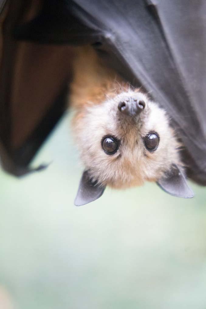 Αν πιστεύετε πως οι νυχτερίδες είναι τρομακτικές αυτές οι φωτογραφίες θα σας αλλάξουν γνώμη (5)