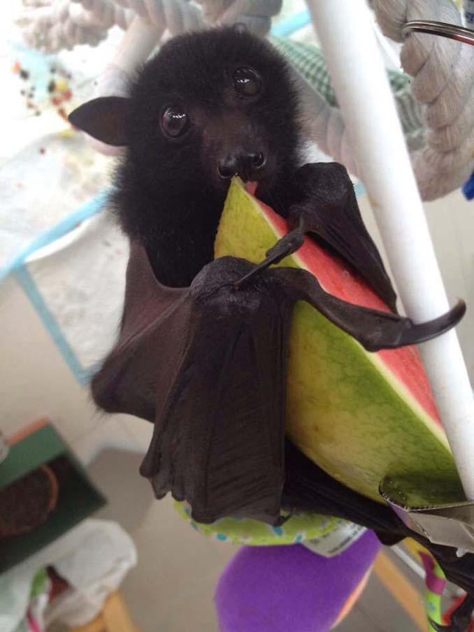 Αν πιστεύετε πως οι νυχτερίδες είναι τρομακτικές αυτές οι φωτογραφίες θα σας αλλάξουν γνώμη (7)