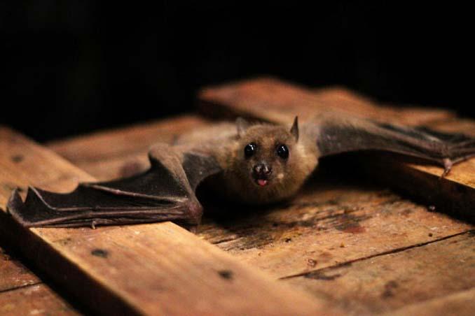 Αν πιστεύετε πως οι νυχτερίδες είναι τρομακτικές αυτές οι φωτογραφίες θα σας αλλάξουν γνώμη (9)