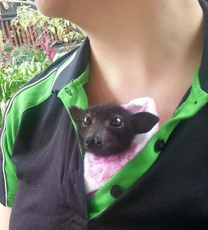 Αν πιστεύετε πως οι νυχτερίδες είναι τρομακτικές αυτές οι φωτογραφίες θα σας αλλάξουν γνώμη (12)