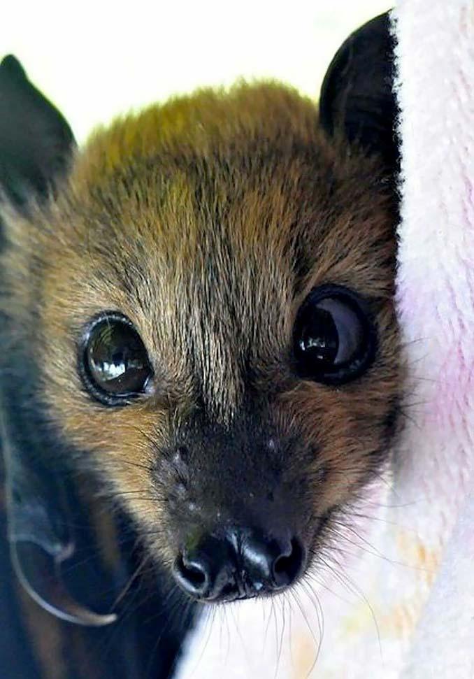 Αν πιστεύετε πως οι νυχτερίδες είναι τρομακτικές αυτές οι φωτογραφίες θα σας αλλάξουν γνώμη (13)