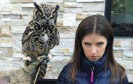 Η τρομακτική Anna Kendrick με την κουκουβάγια της προκάλεσαν ξεκαρδιστικό Photoshop Battle (20)