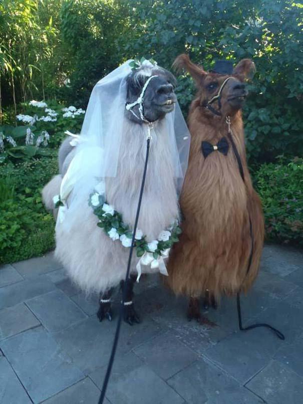 Αστείες φωτογραφίες γάμων #87 (5)