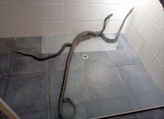 Στην Αυστραλία, τέτοια περιστατικά είναι απλώς καθημερινότητα... (2)